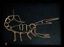 scorpion IMG_6344 x