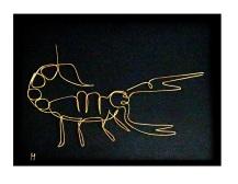 scorpion IMG_6344 x1