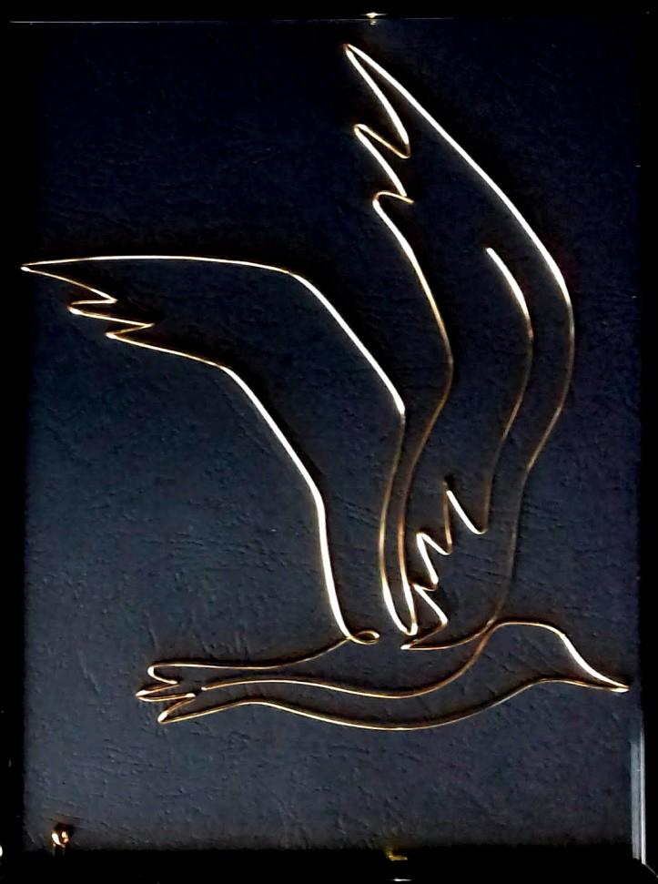 seagull 20191231_112642-1